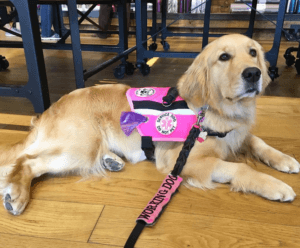 Service Dog Program In Maryland Dc Premier Dog Training